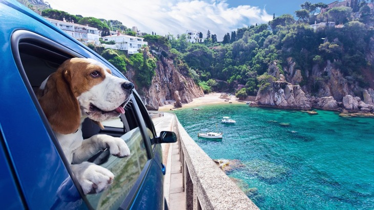 犬と楽しむ平成最後の夏!犬と一緒に夏を楽しく乗り越える方法5つ