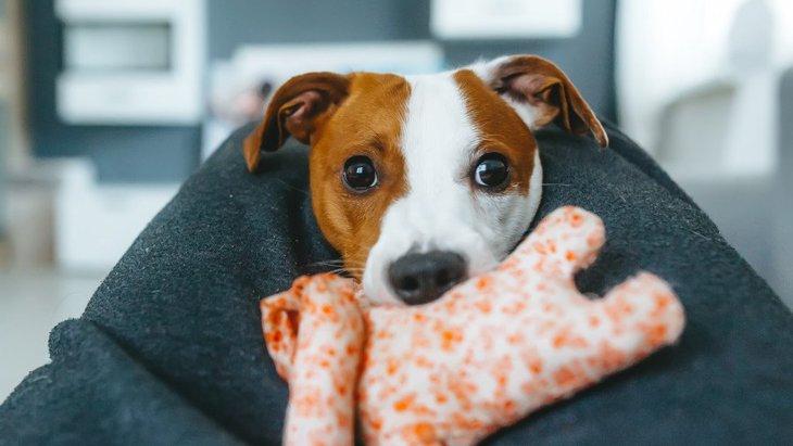 犬と一緒に遊ばなくなるとどうなる?考えられる5つのリスク