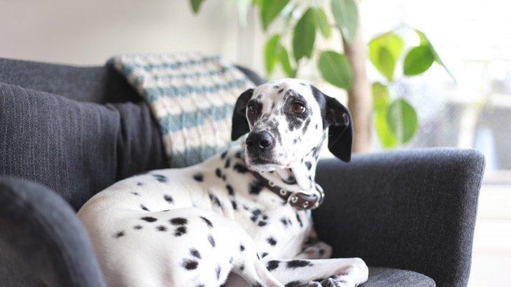 犬の留守番で考えられる『悪影響』2選!どんなケアを心がけるべき?