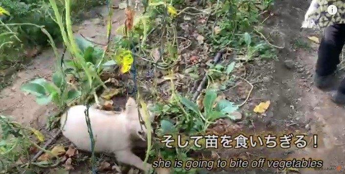 【野良から家庭へ】破壊女王に成長したパピー♡超わんぱくに!