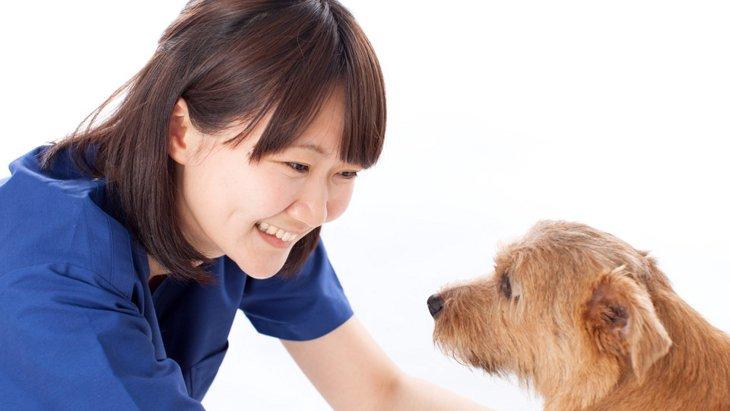 雄犬のチンチンが出て元に戻らなくなった時(嵌頓包茎)の対処法