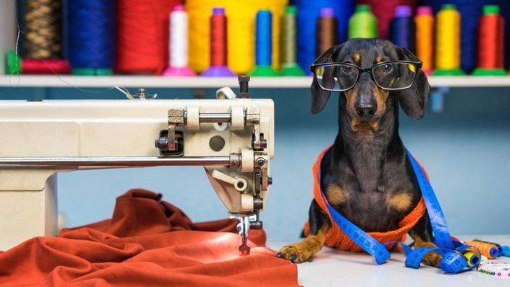 犬用スリングの作り方!簡単に手作りができる方法とは