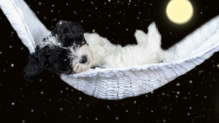 夜でも油断禁物!犬が寝る時の暑さ対策4つ