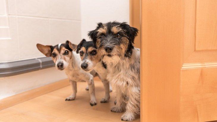 犬が飼い主のトイレやお風呂を覗いてくる心理5つ