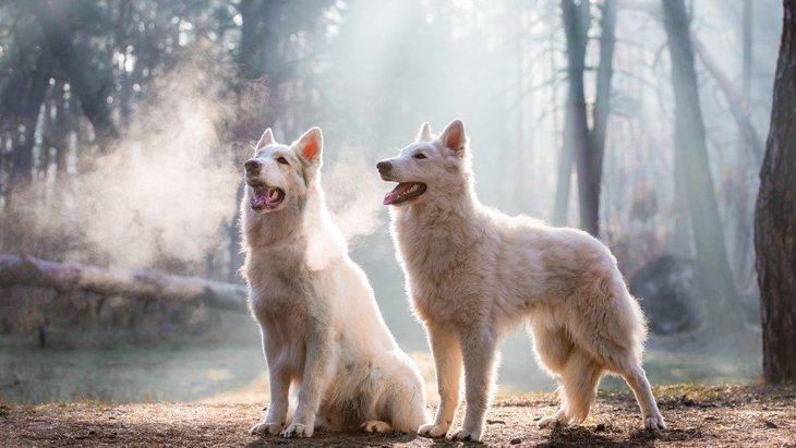 過去の記憶?犬は捕食動物の匂いを生まれつき嗅ぎ分けられる【研究結果】