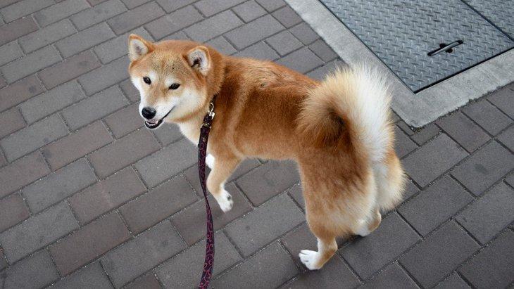 愛犬が散歩中、飼い主をチラチラ見る心理5選