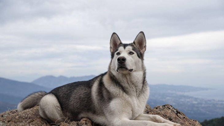 『見分けるのが難しい犬種』3選