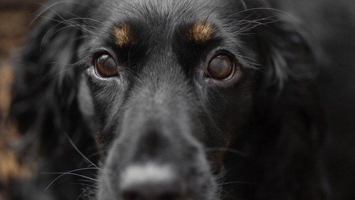 犬の『眉毛』や『ヒゲ』は切っても大丈夫?どういう意味があるの?