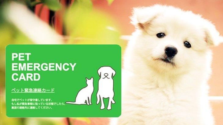万が一に備える1枚のカード、ペットのための『エマージェンシーカード』とは?