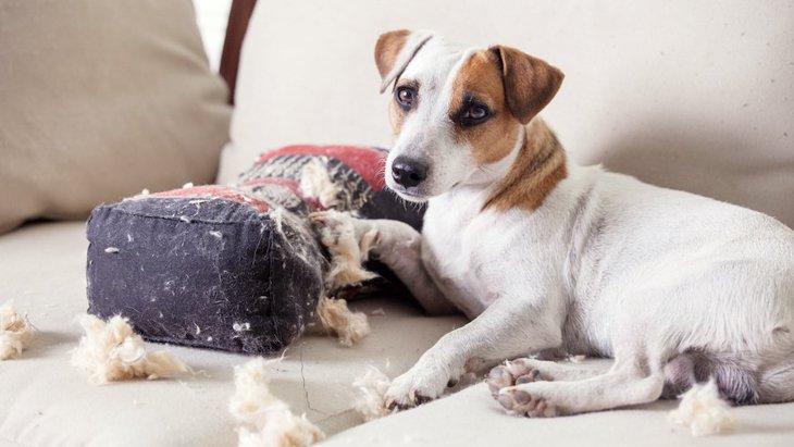 犬を室内で放し飼いするのは良いこと?悪いこと?