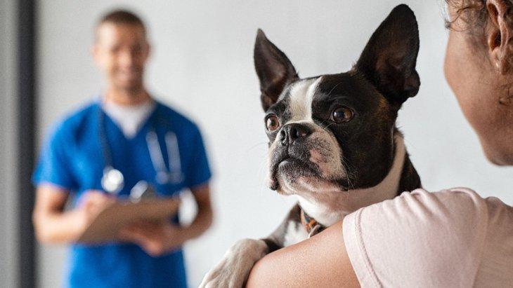 アメリカ〜獣医学で初の3D腹腔鏡で副腎の摘出手術を受けた犬