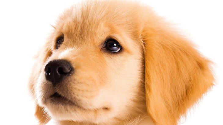 「嫉妬してます!」犬が『羨ましがっている』時に見せる仕草や態度4選