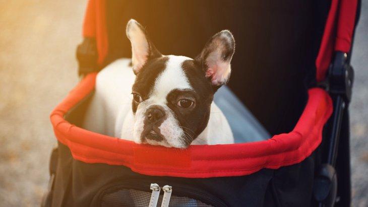 犬のペットカートの選び方と使うメリット!おすすめの商品まで