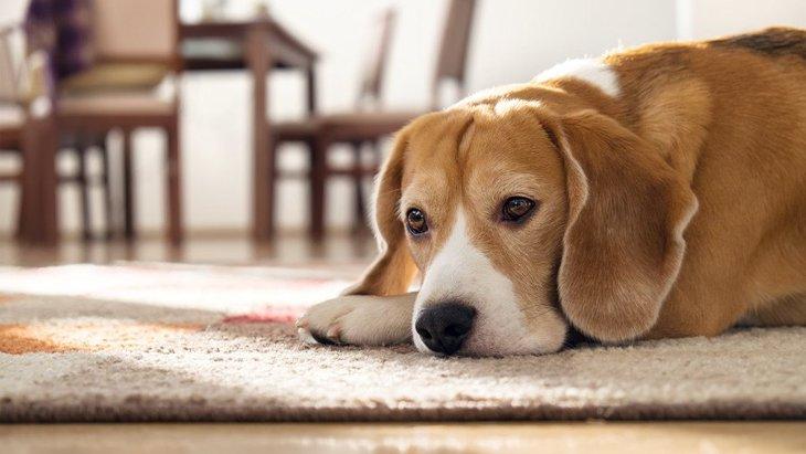 犬がコミュニケーションを取りたがらない時の心理5つ