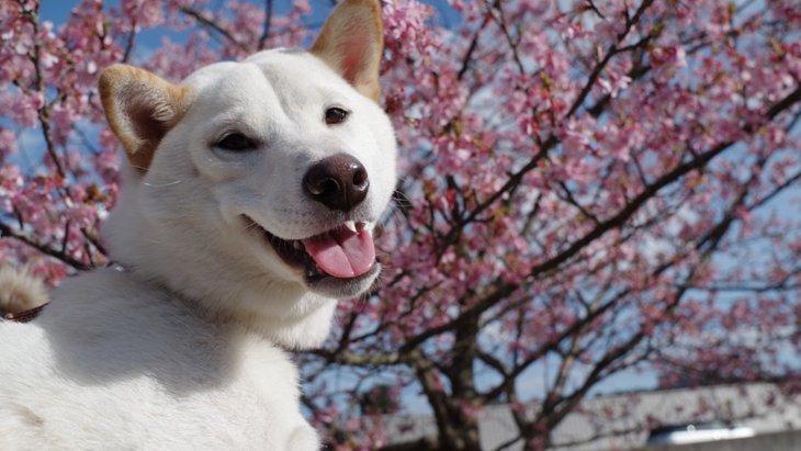 犬が関わる俳句9選