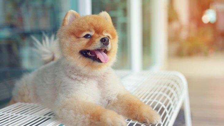どうして犬は種類が多いの?