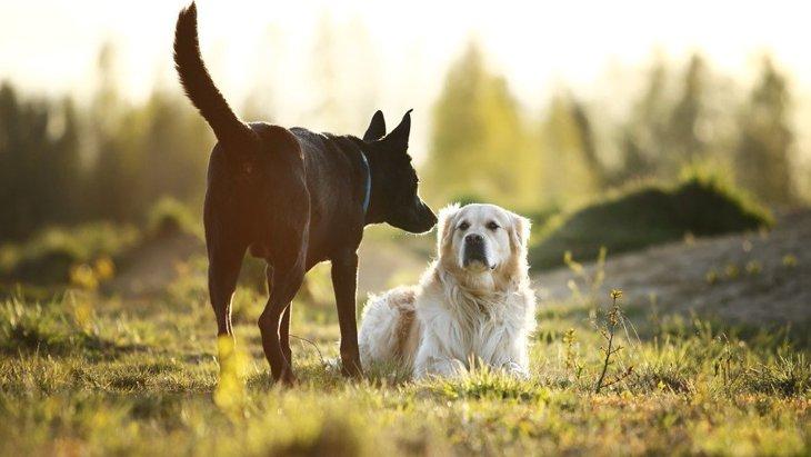 愛犬が『よその犬と挨拶をしている』時の仕草や行動5選!注意すべきことや困った時の対処法とは