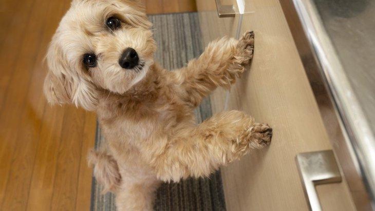 犬の『上目遣い』が意味する4つのこと!おねだりしてるの?謝ってるの?