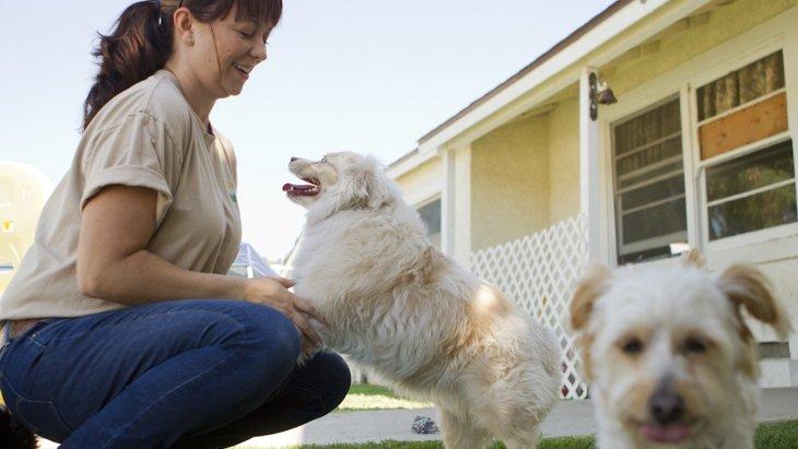 NY市のドッグデイケア発、犬と触れ合いたい人のためのプログラム