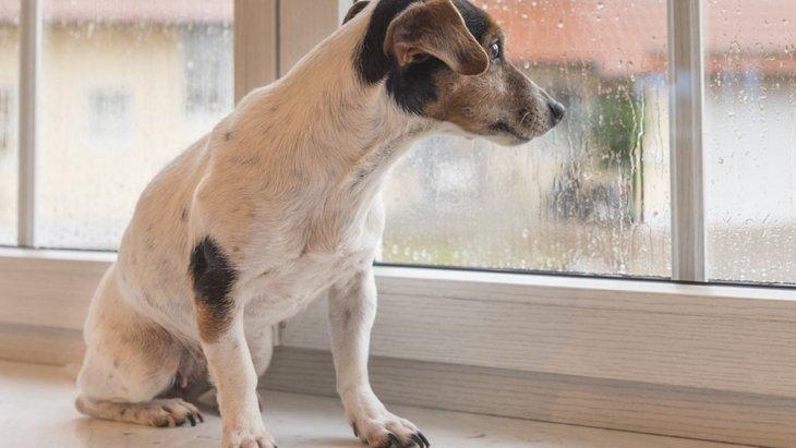 犬との雨の日の過ごし方~3つのアイデア~