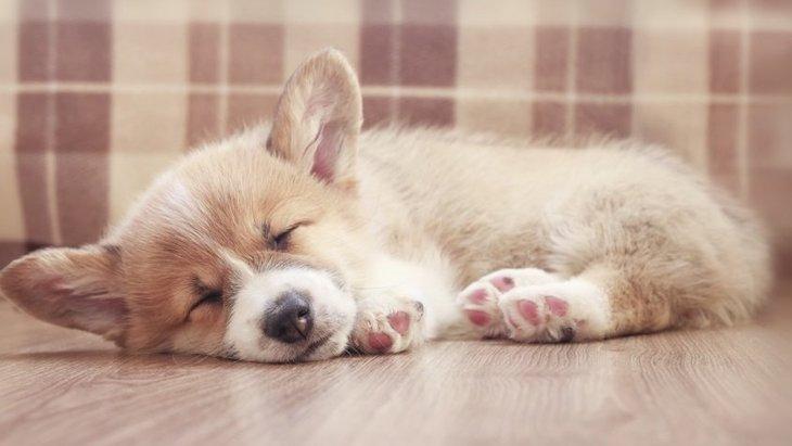 犬の睡眠についての研究から判ること、今後の課題とは