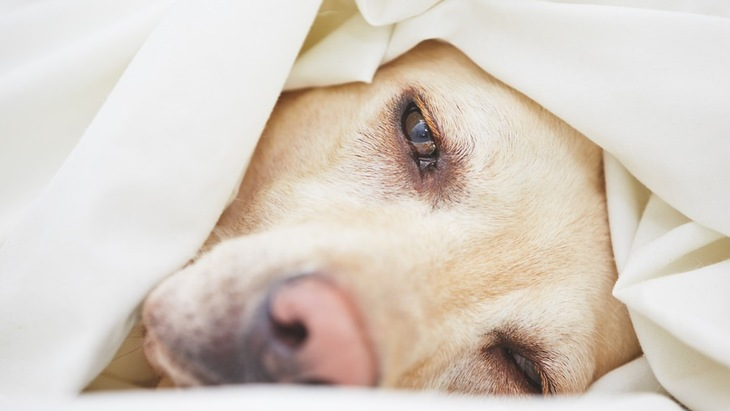 犬から人へ感染する3つの病気!症状から治療法・予防法まで