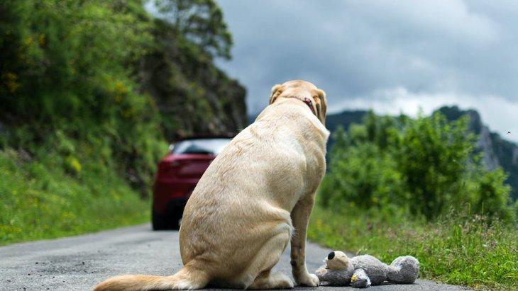 犬が悲しんでしまう3つのこと