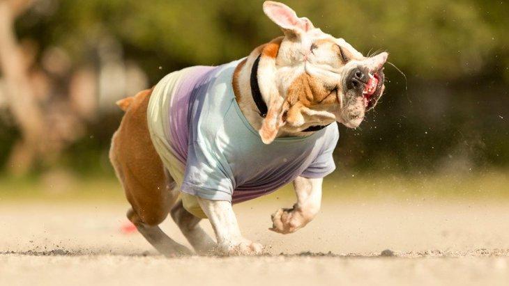犬が身震いをする時の心理5つ