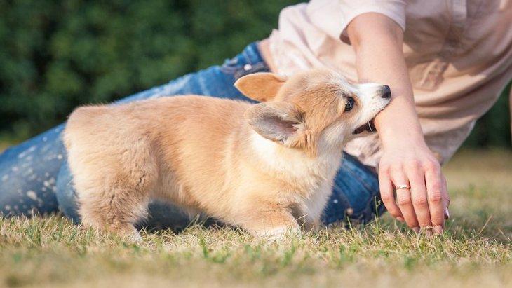 犬の『咬みつき』にもレベルがある?人間にとっての危険な咬みつきとは?