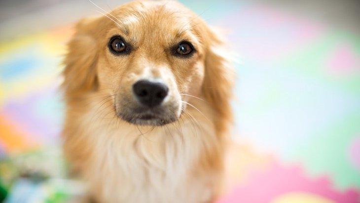 犬が「困り顔」をしているときの気持ちや意味とは?