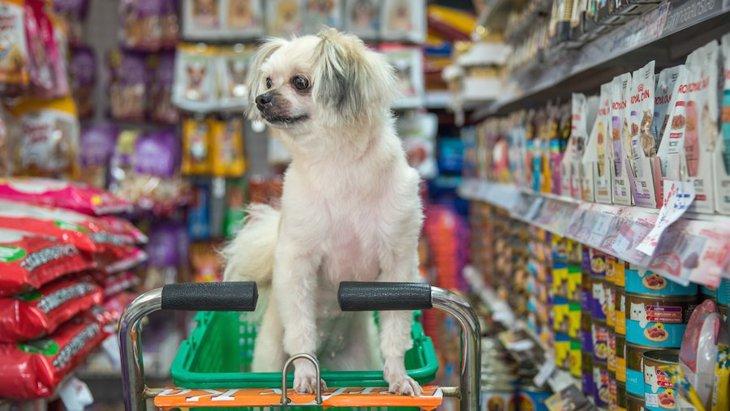 ペットショップに愛犬を連れて行ってもいいの?