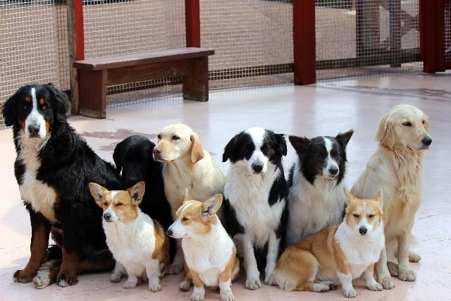 犬が飼えなくなったらどうするの?解決策を探そう!