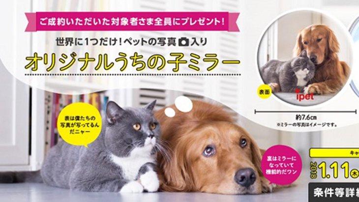 世界に1つだけ!ペットの写真入りミラーキャンペーン実施中!