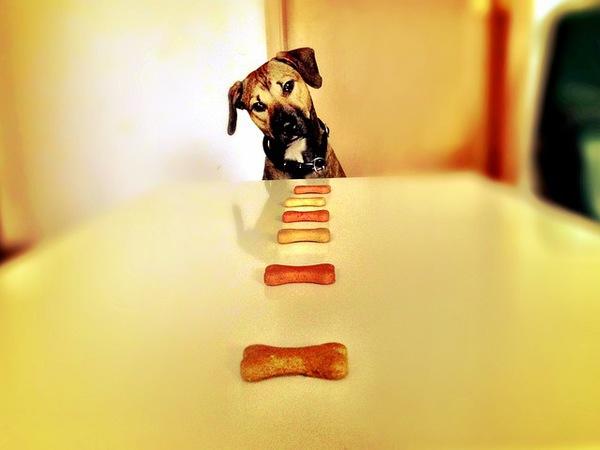 老犬の食事には注意が必要です