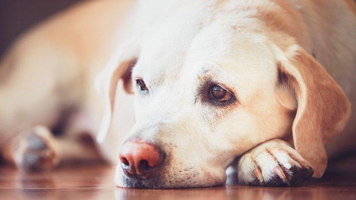 犬が飼い主に捨てられたと感じる行為4つ