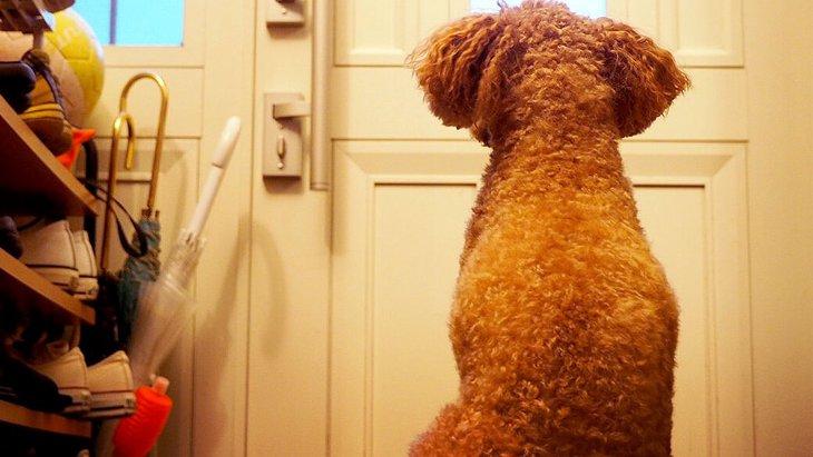 犬が玄関から離れないときの心理