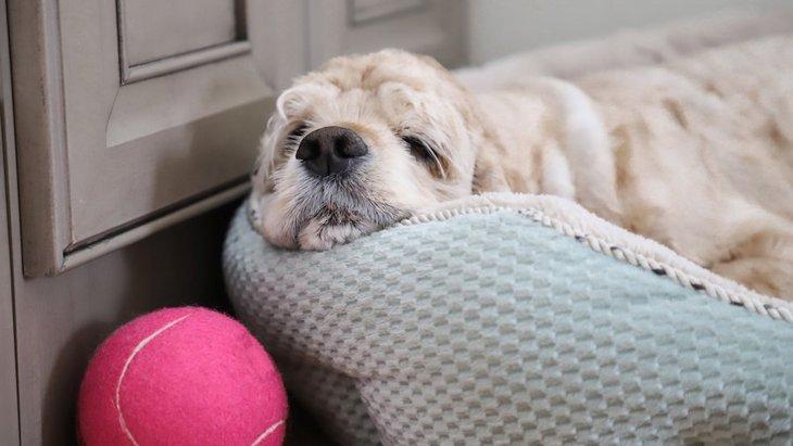 犬が好きとも嫌いとも思っていない人にする仕草5選