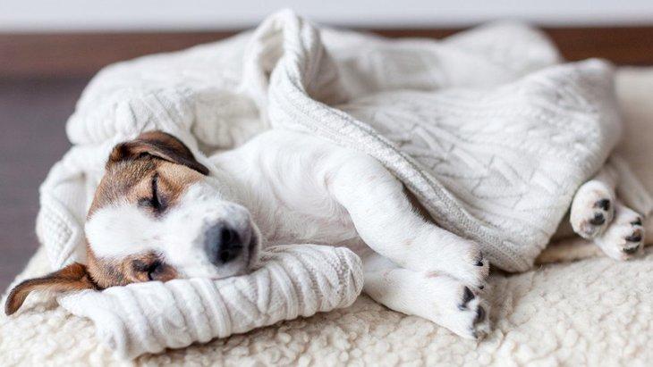 犬が寝ている時にしている『不思議な行動』4つ