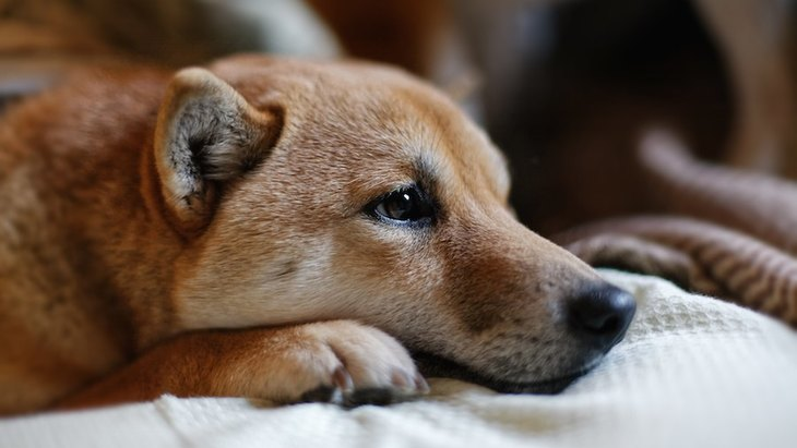 犬が飼い主に甘えてこない時の理由6つ