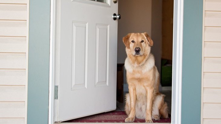犬のお留守番前、絶対に確認するべき5つのこと