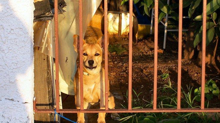 愛犬のお留守番のストレスを軽くしてあげよう!飼い主にできる5つのこと