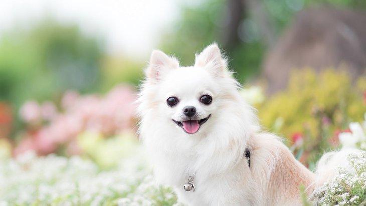 犬が『褒められた』時によくする仕草8選