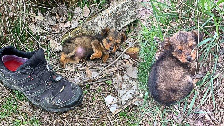 『捨てられた靴』に寄り添って眠る子犬をレスキュー!