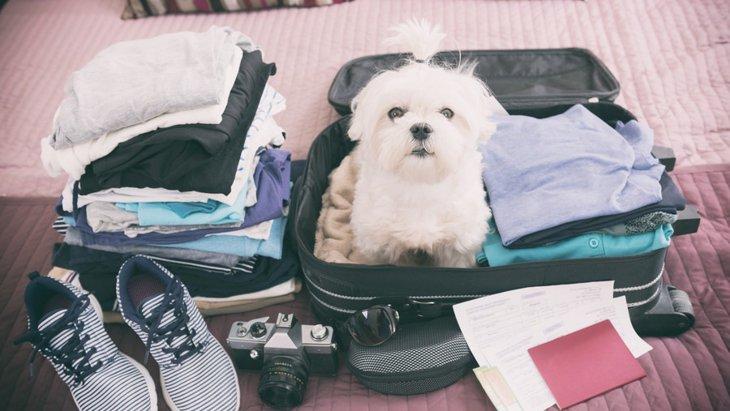 愛犬と一緒に海外へ行く際に必要な手続きとは?