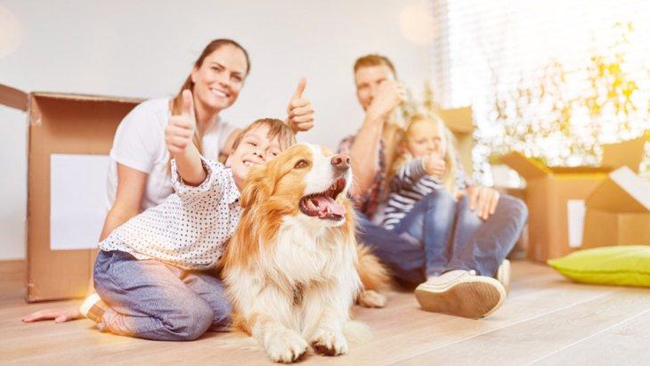 犬が『褒めてほしい時』にする態度や仕草4選!正しい対処法は?
