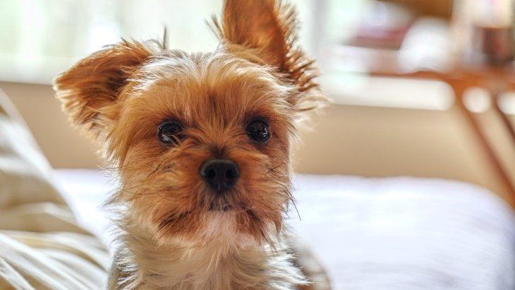 犬が部屋中をクンクン嗅ぐ理由5つ!犬にとって『匂い』はとっても重要!