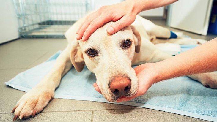 迷い犬を見つけたらどうするべき?連絡先や保護方法、その後の対応まで