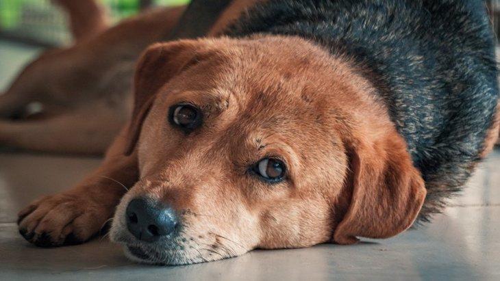 犬が『クッシング症候群』になっている時の初期症状6選