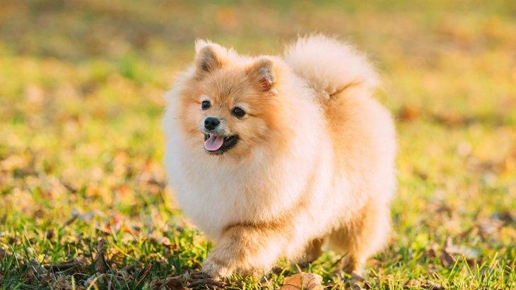犬の飼い主が他人から言われたくない言葉5選