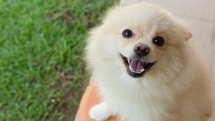 あなたは愛されてる?犬が『好きな人だけにする反応』4選♡
